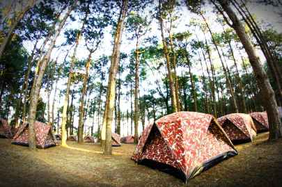 camp camping environment forest